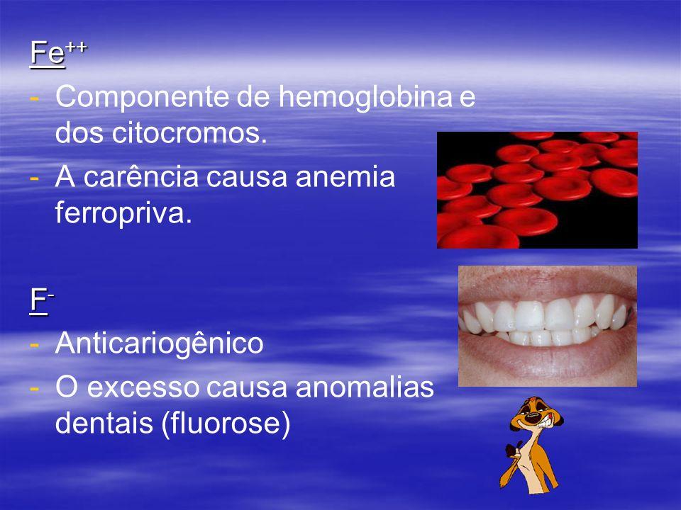 Fe ++ - -Componente de hemoglobina e dos citocromos.