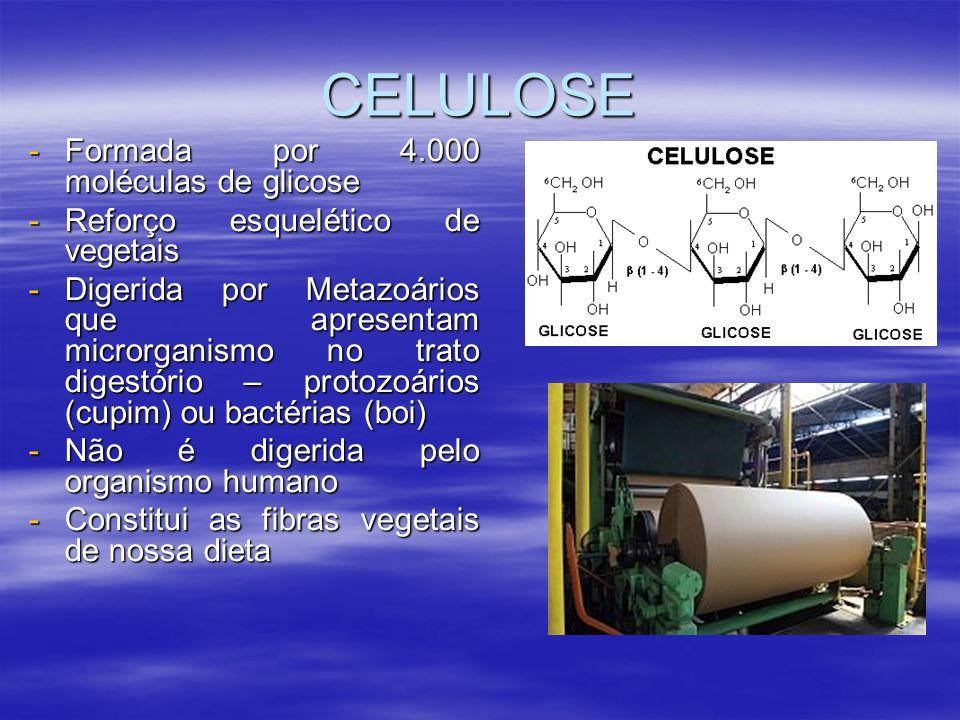 CELULOSE -Formada por 4.000 moléculas de glicose -Reforço esquelético de vegetais -Digerida por Metazoários que apresentam microrganismo no trato digestório – protozoários (cupim) ou bactérias (boi) -Não é digerida pelo organismo humano -Constitui as fibras vegetais de nossa dieta