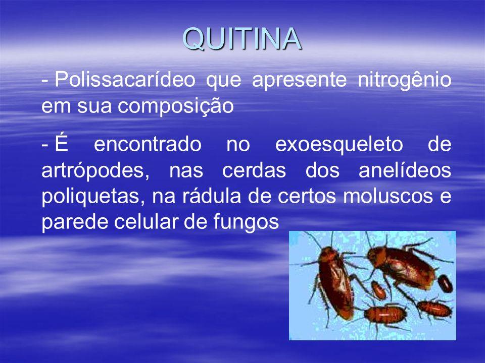 QUITINA - Polissacarídeo que apresente nitrogênio em sua composição - É encontrado no exoesqueleto de artrópodes, nas cerdas dos anelídeos poliquetas, na rádula de certos moluscos e parede celular de fungos
