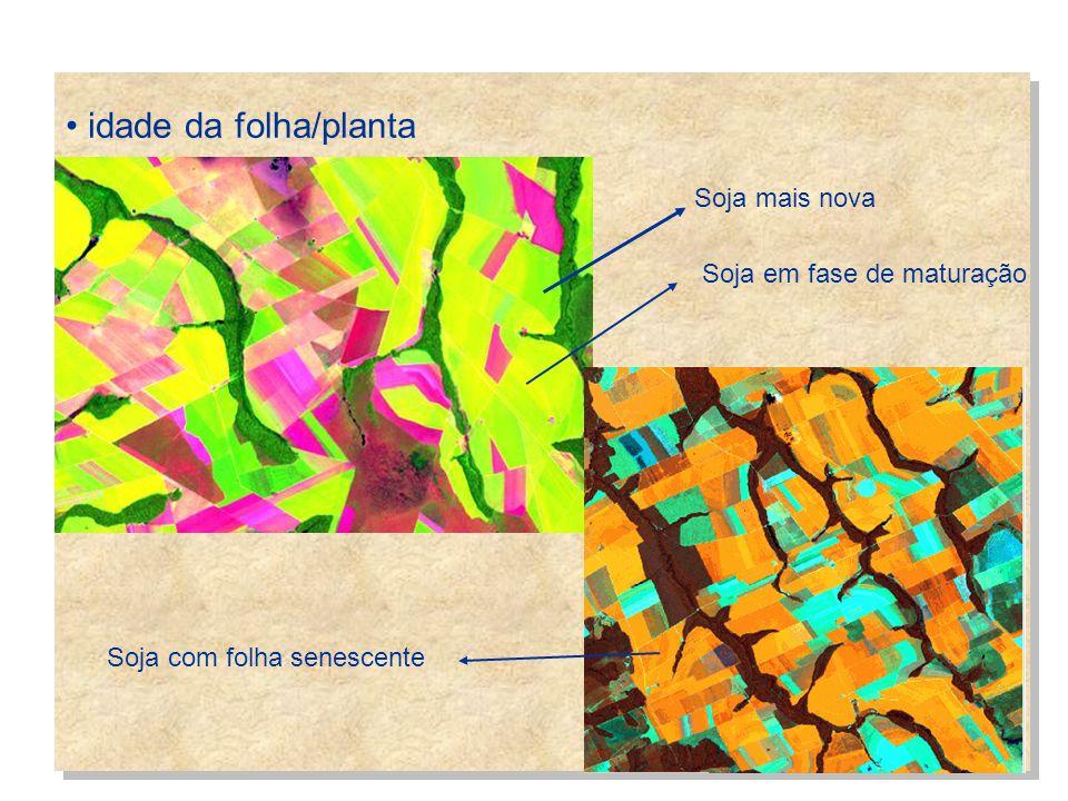 idade da folha/planta Soja mais nova Soja em fase de maturação Soja com folha senescente