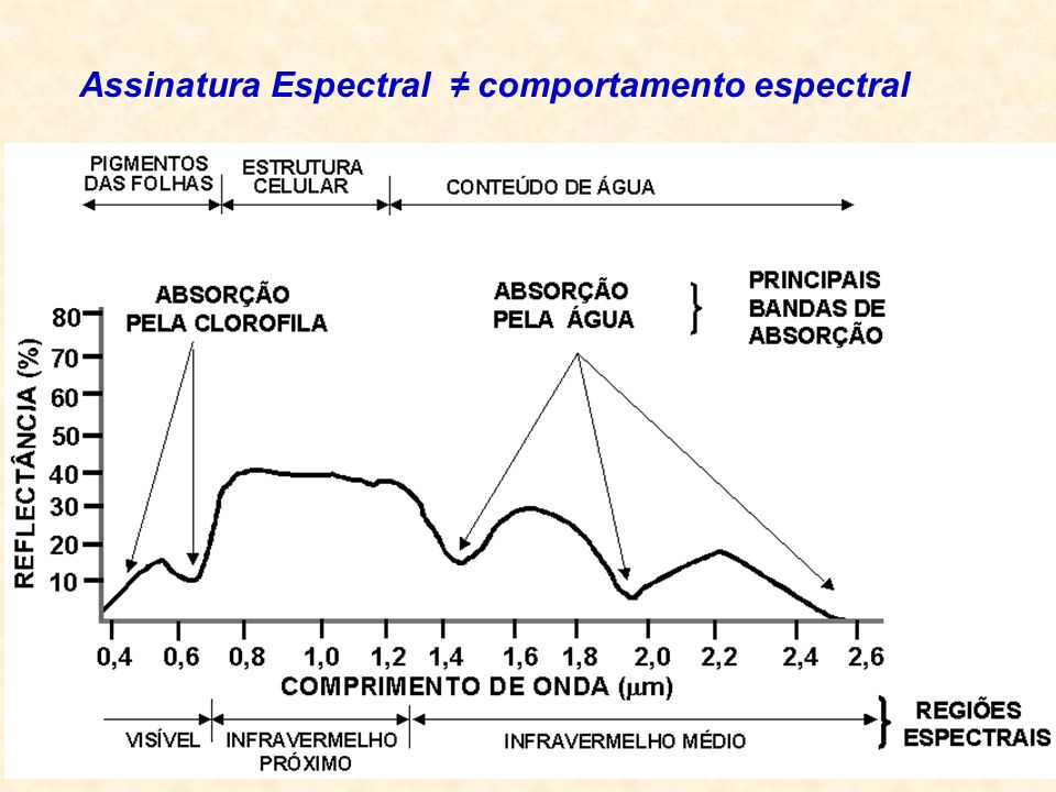 Maior contribuição folhas Assinatura Espectral comportamento espectral
