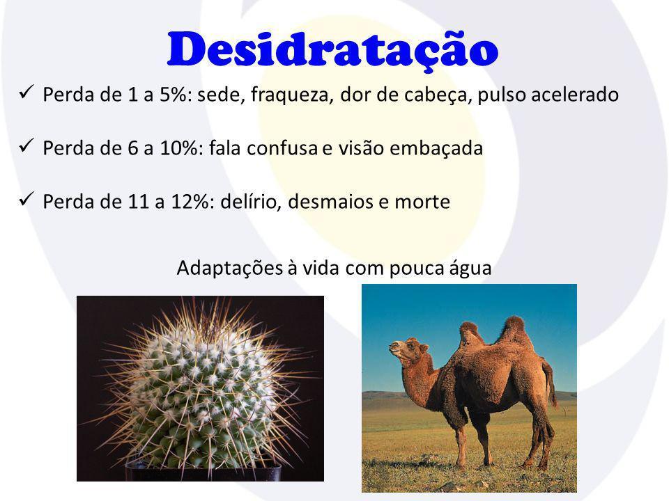 Desidratação Perda de 1 a 5%: sede, fraqueza, dor de cabeça, pulso acelerado Perda de 6 a 10%: fala confusa e visão embaçada Perda de 11 a 12%: delíri