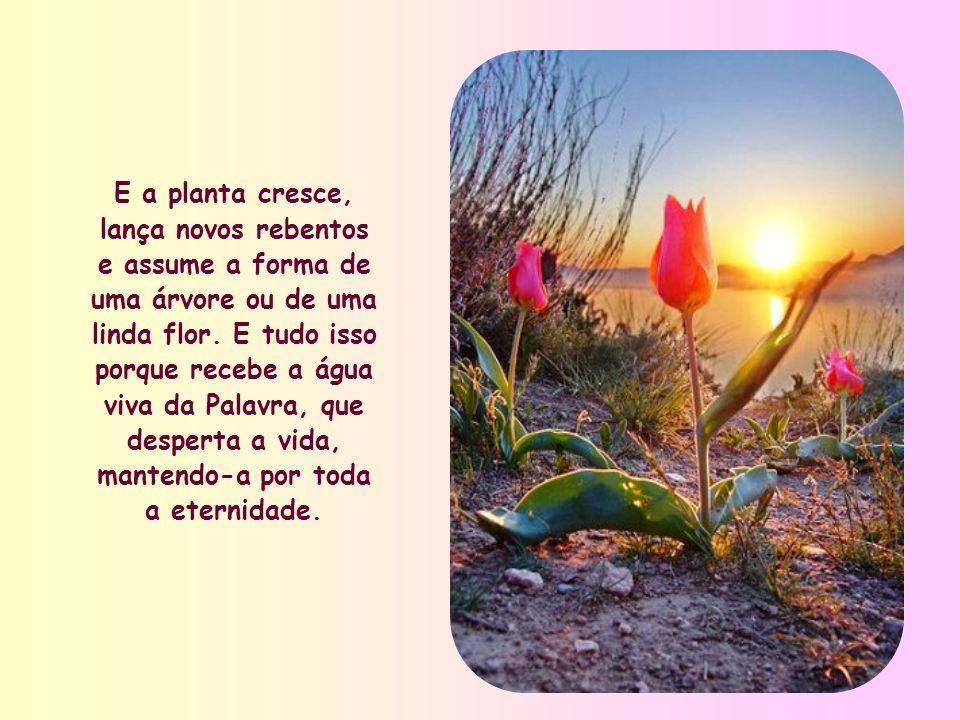 Assim como o deserto floresce somente depois de uma chuva abundante, as sementes plantadas em nós com o batismo só podem germinar se forem regadas pela Palavra de Deus.