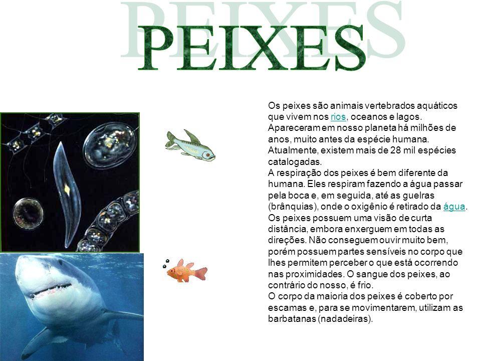 Reino:Reino: AnimaliaAnimalia Filo:Filo: ChordataChordata Os peixes são animais vertebrados aquáticos que vivem nos rios, oceanos e lagos. Apareceram