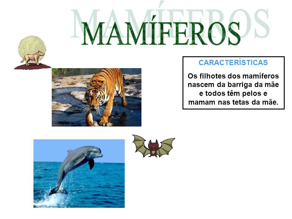 CARACTERÍSTICAS Os filhotes dos mamíferos nascem da barriga da mãe e todos têm pelos e mamam nas tetas da mãe.