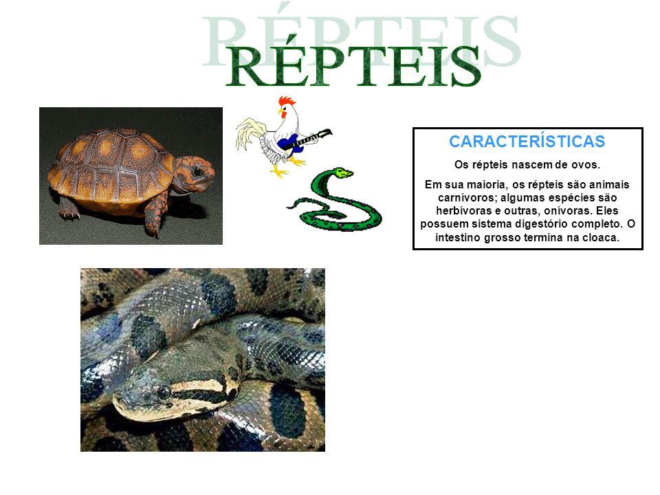 CARACTERÍSTICAS Os répteis nascem de ovos. Em sua maioria, os répteis são animais carnívoros; algumas espécies são herbívoras e outras, onívoras. Eles