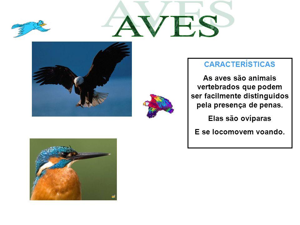 CARACTERÍSTICAS As aves são animais vertebrados que podem ser facilmente distinguidos pela presença de penas. Elas são ovíparas E se locomovem voando.
