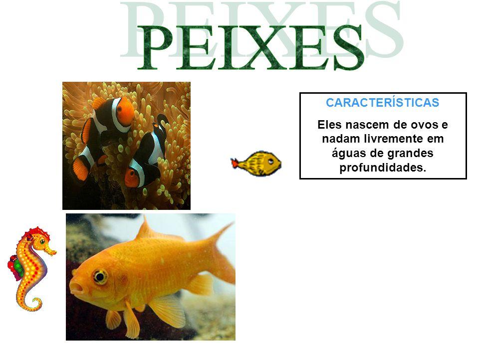 CARACTERÍSTICAS Eles nascem de ovos e nadam livremente em águas de grandes profundidades.