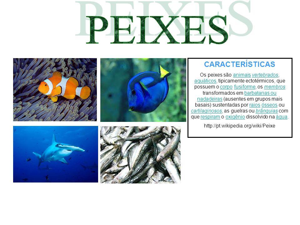 CARACTERÍSTICAS Os peixes são animais vertebrados, aquáticos, tipicamente ectotérmicos, que possuem o corpo fusiforme, os membros transformados em bar