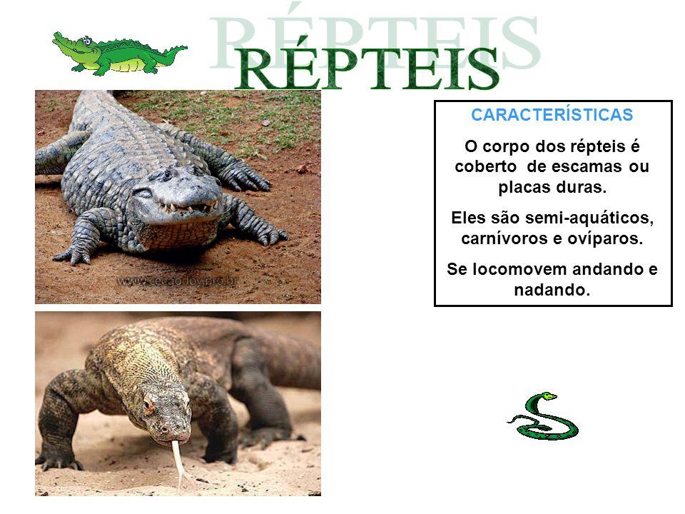 CARACTERÍSTICAS O corpo dos répteis é coberto de escamas ou placas duras. Eles são semi-aquáticos, carnívoros e ovíparos. Se locomovem andando e nadan