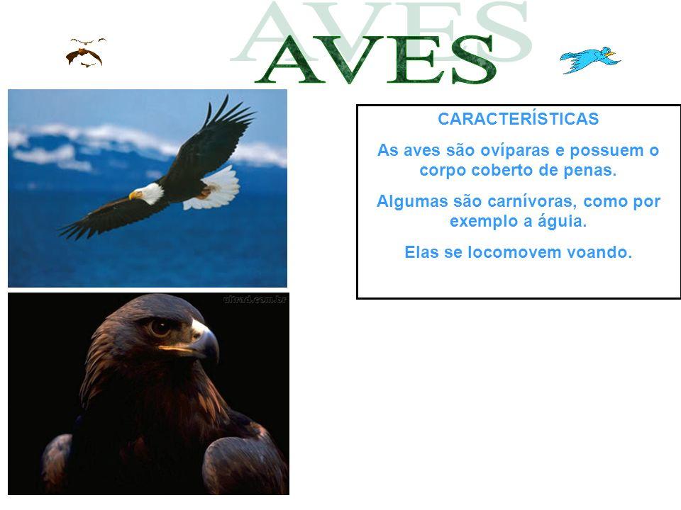 CARACTERÍSTICAS As aves são ovíparas e possuem o corpo coberto de penas. Algumas são carnívoras, como por exemplo a águia. Elas se locomovem voando.
