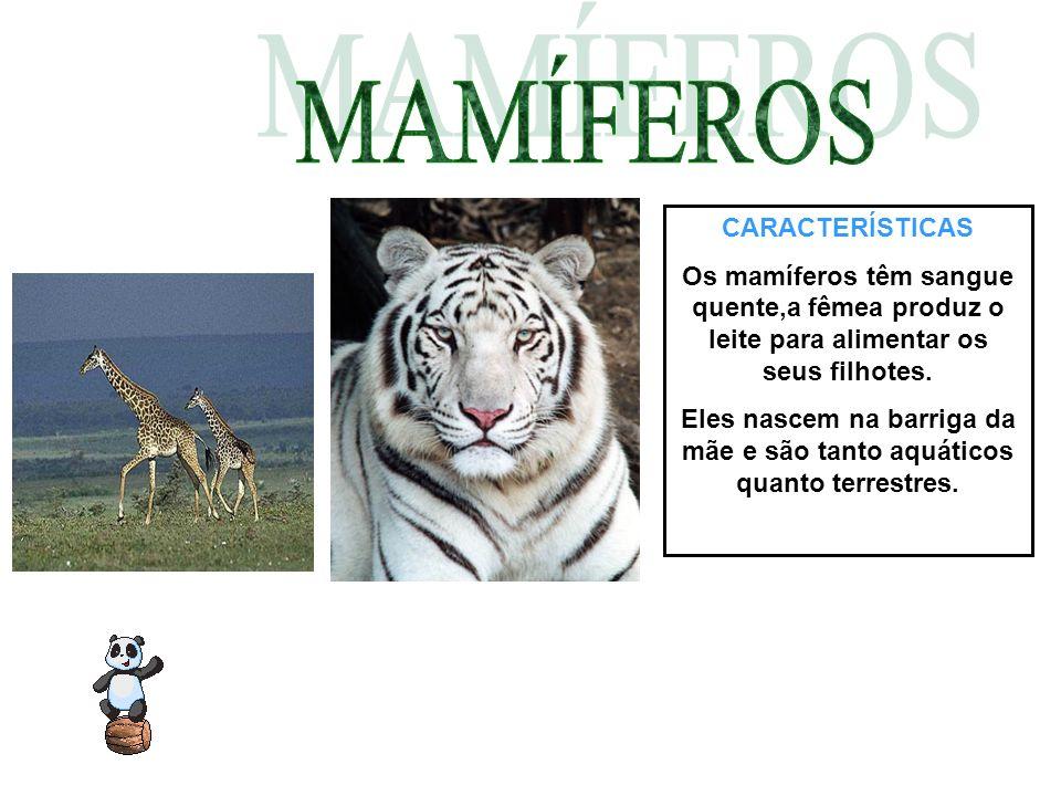 CARACTERÍSTICAS Os mamíferos têm sangue quente,a fêmea produz o leite para alimentar os seus filhotes. Eles nascem na barriga da mãe e são tanto aquát