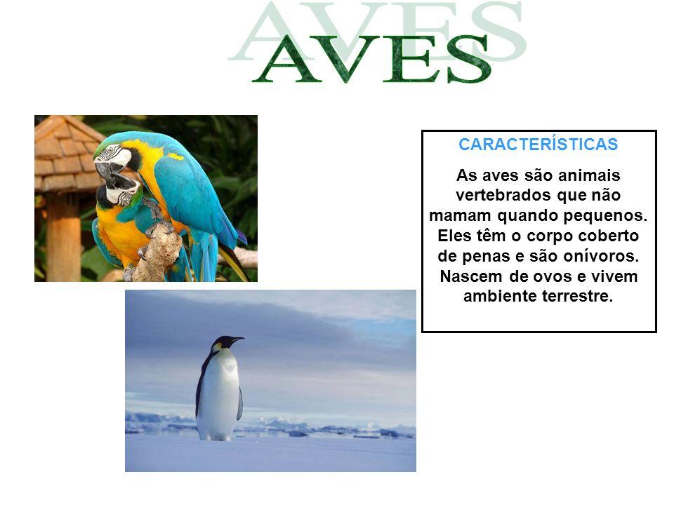 CARACTERÍSTICAS As aves são animais vertebrados que não mamam quando pequenos. Eles têm o corpo coberto de penas e são onívoros. Nascem de ovos e vive
