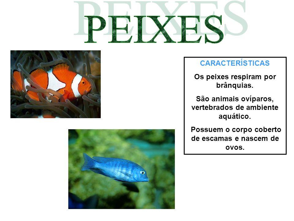 CARACTERÍSTICAS Os peixes respiram por brânquias. São animais ovíparos, vertebrados de ambiente aquático. Possuem o corpo coberto de escamas e nascem