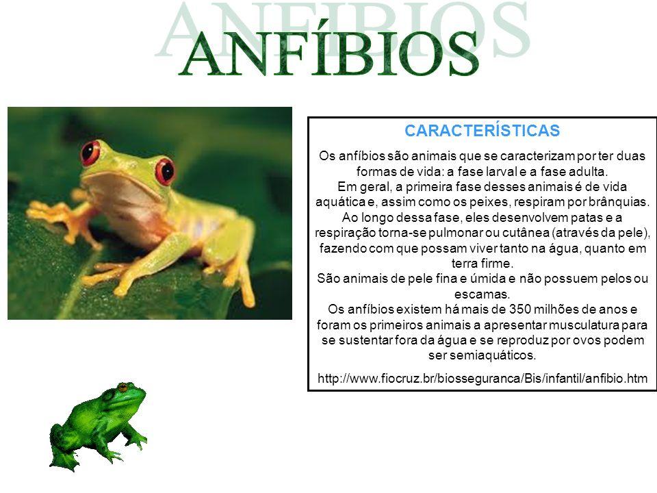 CARACTERÍSTICAS Os anfíbios são animais que se caracterizam por ter duas formas de vida: a fase larval e a fase adulta. Em geral, a primeira fase dess