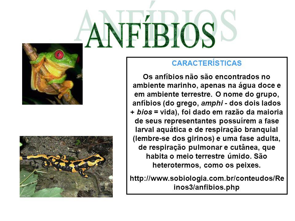 CARACTERÍSTICAS Os anfíbios não são encontrados no ambiente marinho, apenas na água doce e em ambiente terrestre. O nome do grupo, anfíbios (do grego,