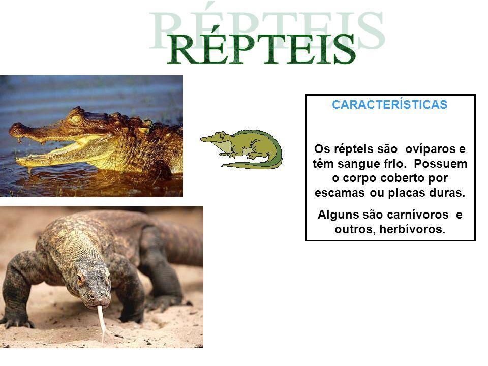 CARACTERÍSTICAS Os répteis são ovíparos e têm sangue frio. Possuem o corpo coberto por escamas ou placas duras. Alguns são carnívoros e outros, herbív