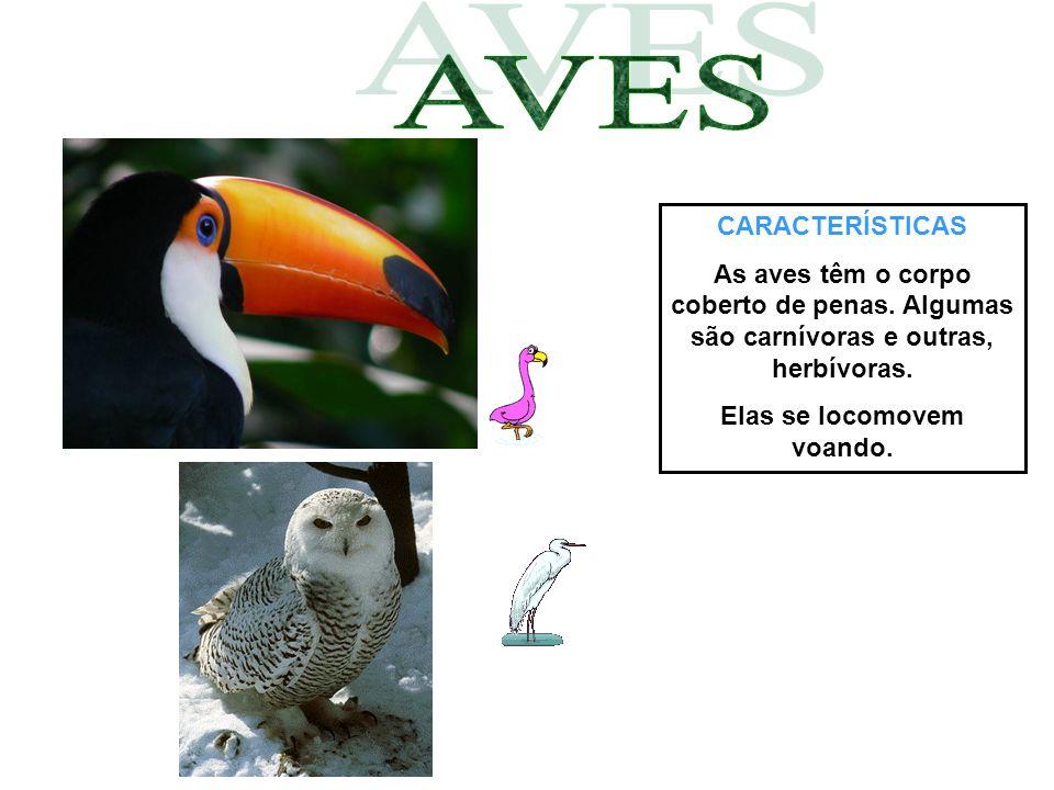 CARACTERÍSTICAS As aves têm o corpo coberto de penas. Algumas são carnívoras e outras, herbívoras. Elas se locomovem voando.