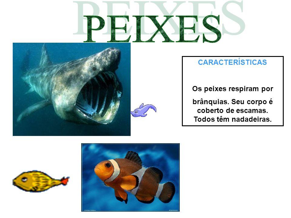 CARACTERÍSTICAS Os peixes respiram por brânquias. Seu corpo é coberto de escamas. Todos têm nadadeiras.
