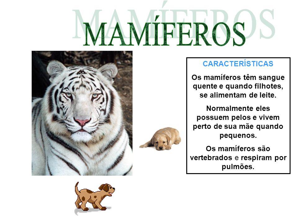 CARACTERÍSTICAS Os mamíferos têm sangue quente e quando filhotes, se alimentam de leite. Normalmente eles possuem pelos e vivem perto de sua mãe quand