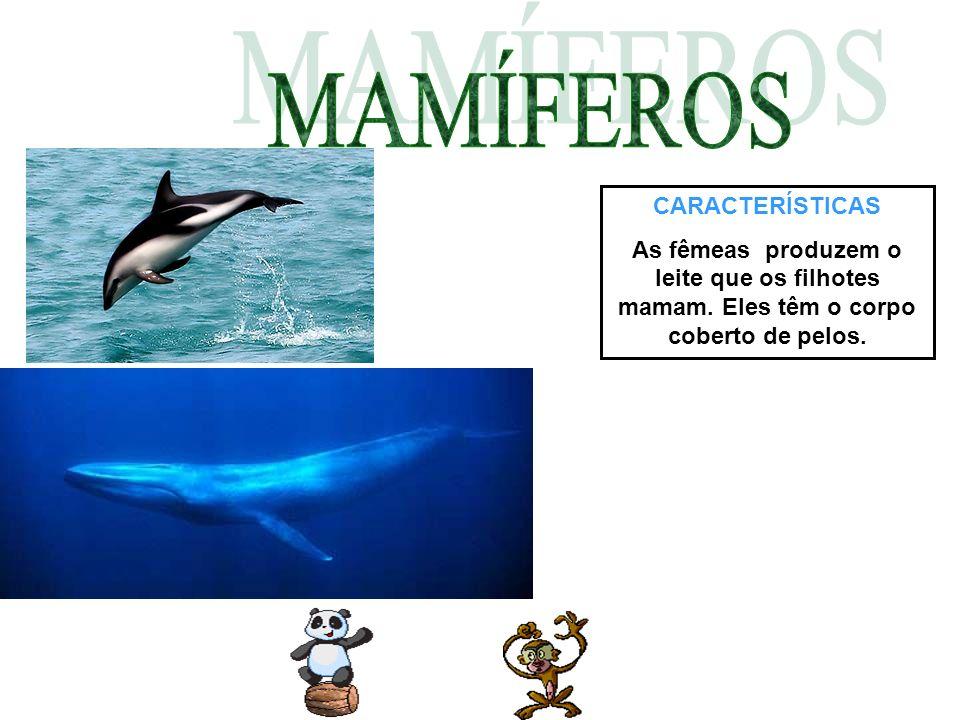 CARACTERÍSTICAS Os répteis são ovíparos, põem menos ovos que os peixes e anfíbios.