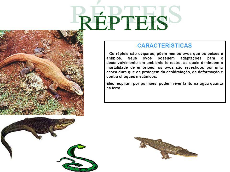 CARACTERÍSTICAS Os répteis são ovíparos, põem menos ovos que os peixes e anfíbios. Seus ovos possuem adaptações para o desenvolvimento em ambiente ter