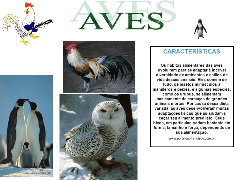 CARACTERÍSTICAS Os hábitos alimentares das aves evoluíram para se adaptar à incrível diversidade de ambientes e estilos de vida desses animais. Eles c