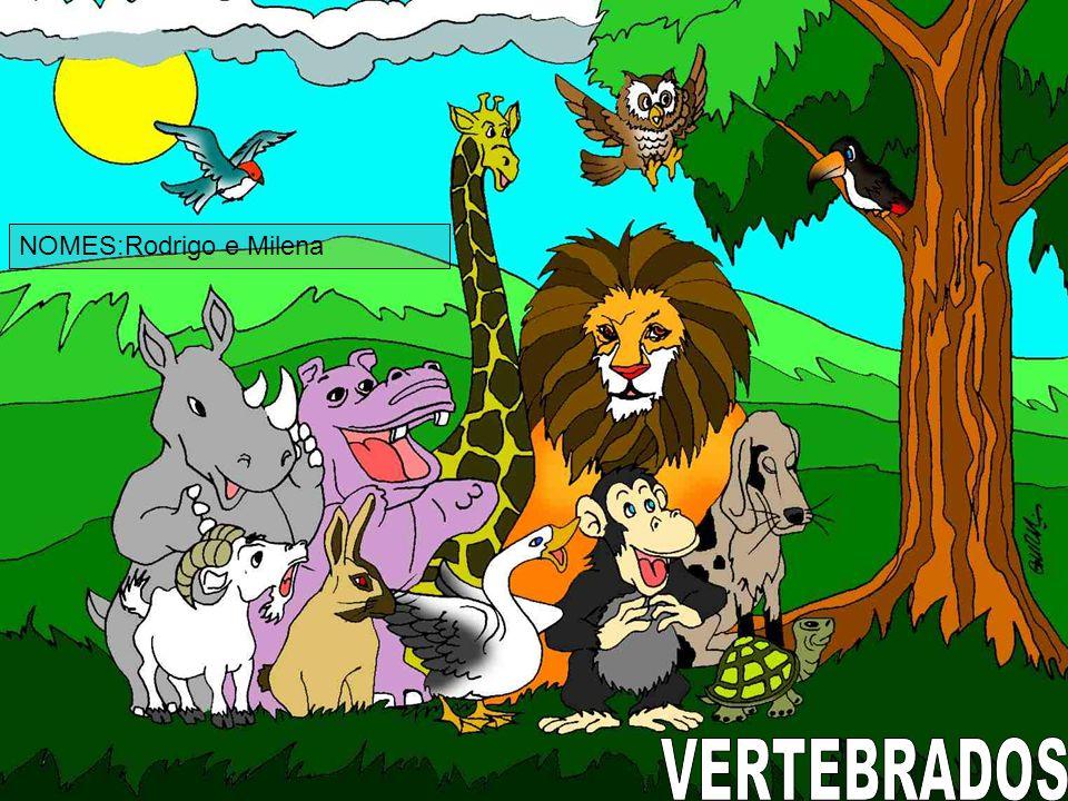 CARACTERÍSTICAS Os mamíferos constituem uma classe de animais vertebrados, que se caracterizam pela presença de glândulas mamárias que, nas fêmeas, produzem leite para alimentação dos filhotes (ou crias), e a presença de pelos ou cabelos.