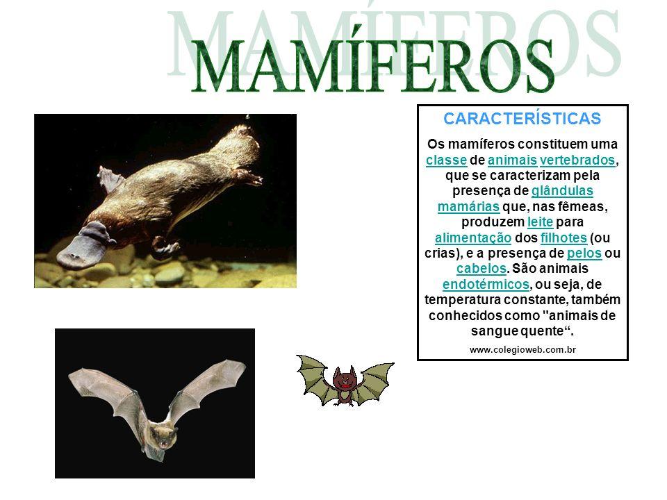CARACTERÍSTICAS Os mamíferos constituem uma classe de animais vertebrados, que se caracterizam pela presença de glândulas mamárias que, nas fêmeas, pr