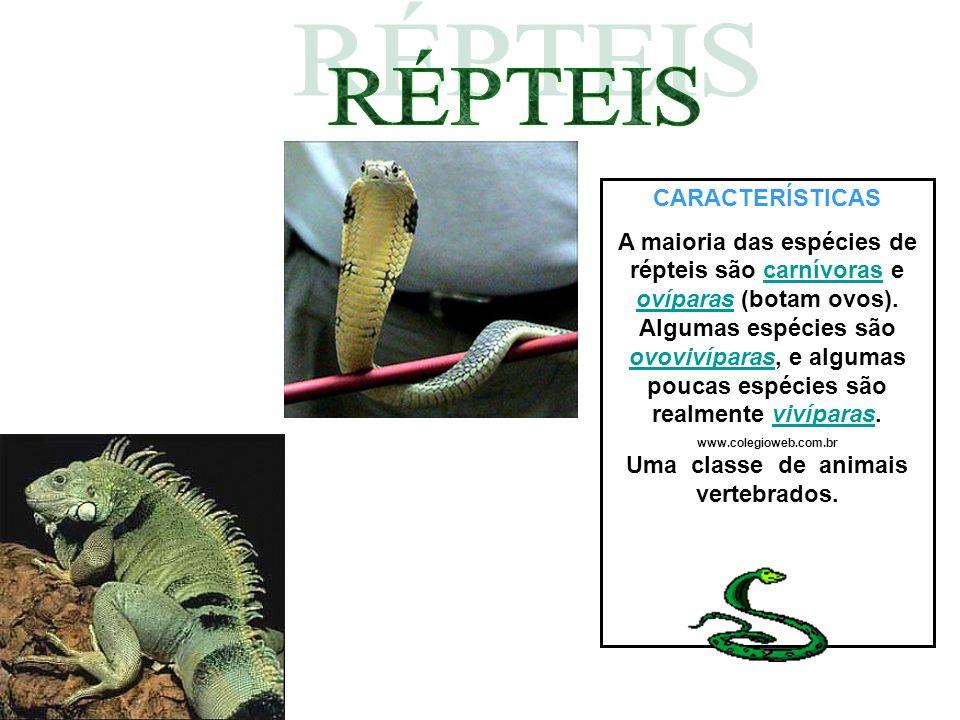 CARACTERÍSTICAS Uma classe de animais vertebrados.