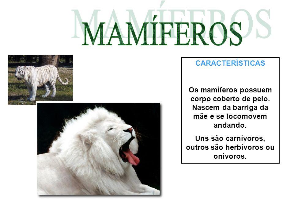 CARACTERÍSTICAS Os mamíferos possuem corpo coberto de pelo. Nascem da barriga da mãe e se locomovem andando. Uns são carnívoros, outros são herbívoros