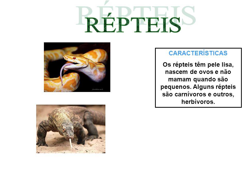 CARACTERÍSTICAS Os répteis têm pele lisa, nascem de ovos e não mamam quando são pequenos. Alguns répteis são carnívoros e outros, herbívoros.