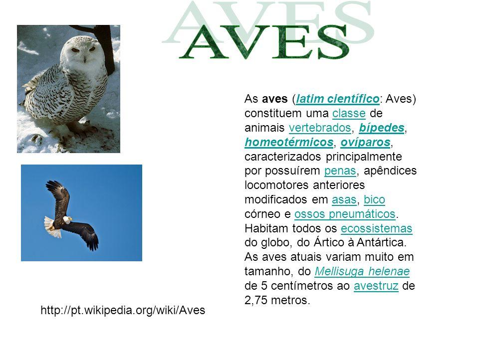 As aves (latim científico: Aves) constituem uma classe de animais vertebrados, bípedes, homeotérmicos, ovíparos, caracterizados principalmente por pos