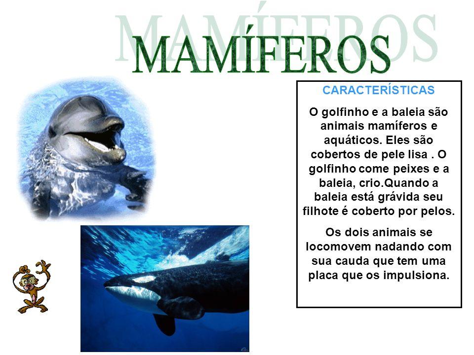 CARACTERÍSTICAS O golfinho e a baleia são animais mamíferos e aquáticos. Eles são cobertos de pele lisa. O golfinho come peixes e a baleia, crio.Quand