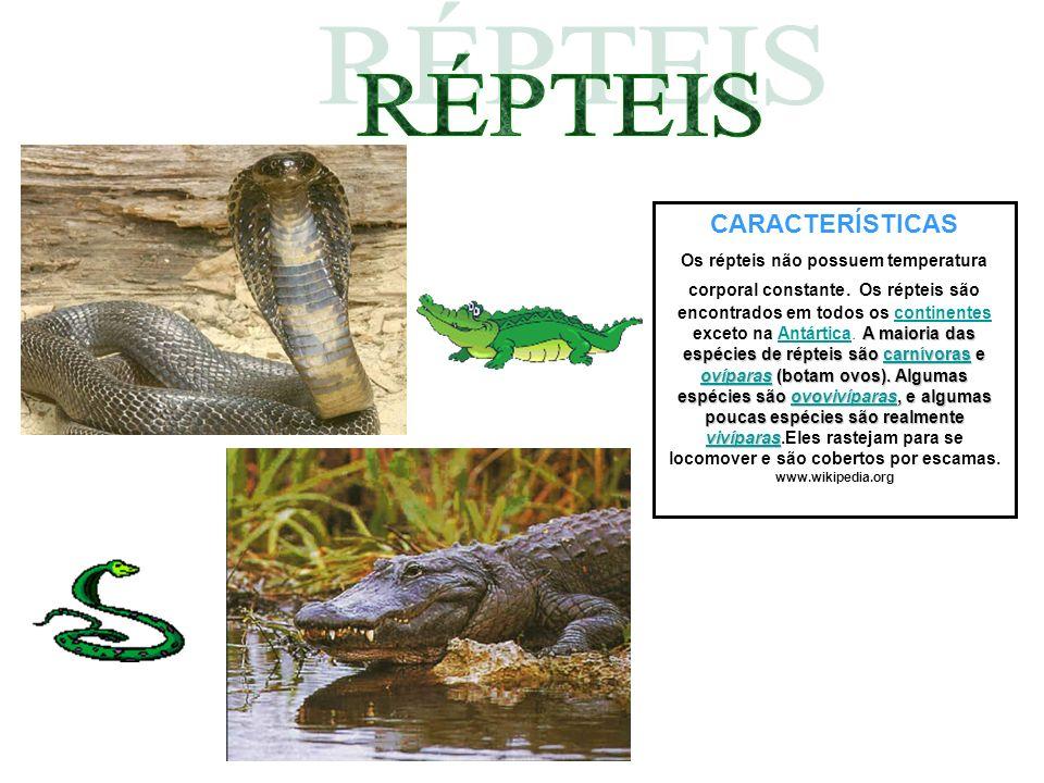 CARACTERÍSTICAS A maioria das espécies de répteis são carnívoras e ovíparas (botam ovos). Algumas espécies são ovovivíparas, e algumas poucas espécies