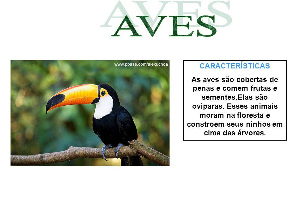 CARACTERÍSTICAS As aves são cobertas de penas e comem frutas e sementes.Elas são ovíparas. Esses animais moram na floresta e constroem seus ninhos em