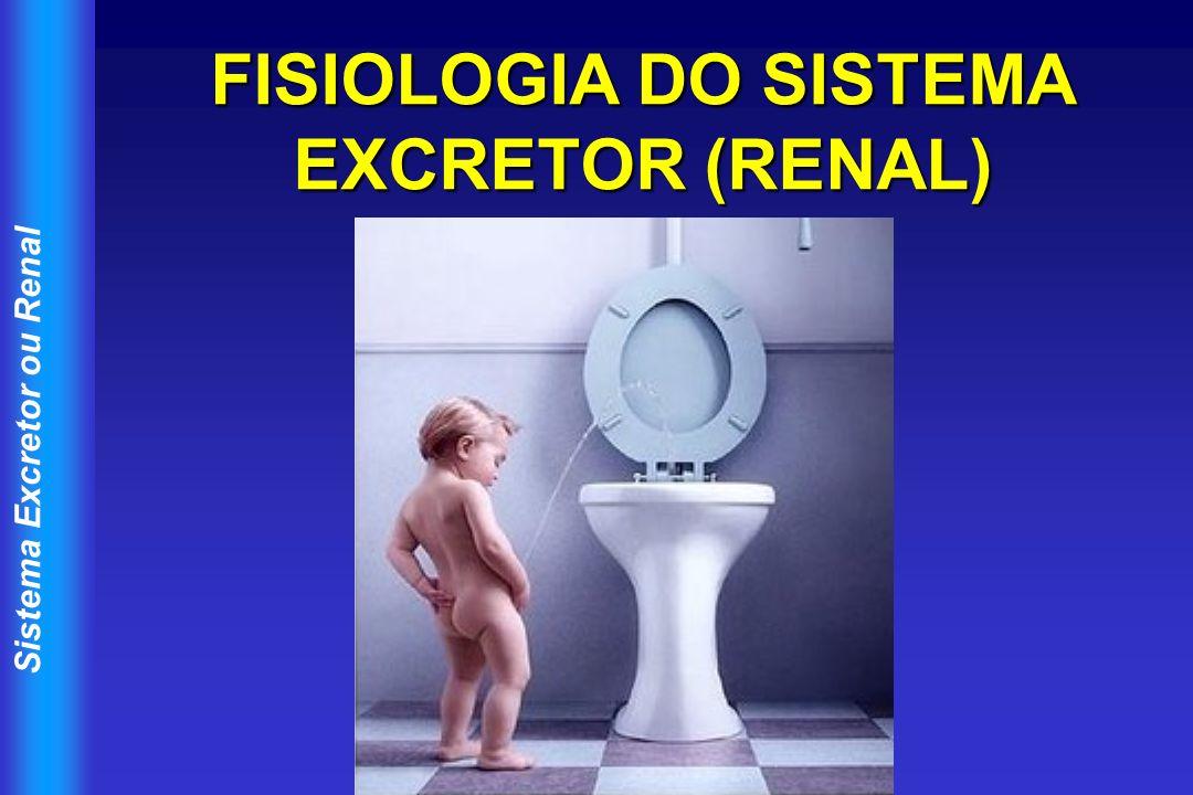 Sistema Excretor ou Renal Estruturas Componentes Rim (2); ureter (2); bexiga urinária; uretra