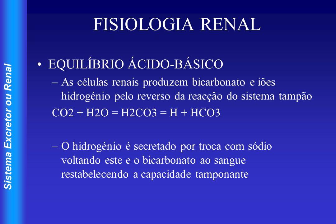 Sistema Excretor ou Renal FISIOLOGIA RENAL EQUILÍBRIO ÁCIDO-BÁSICO –As células renais produzem bicarbonato e iões hidrogénio pelo reverso da reacção d