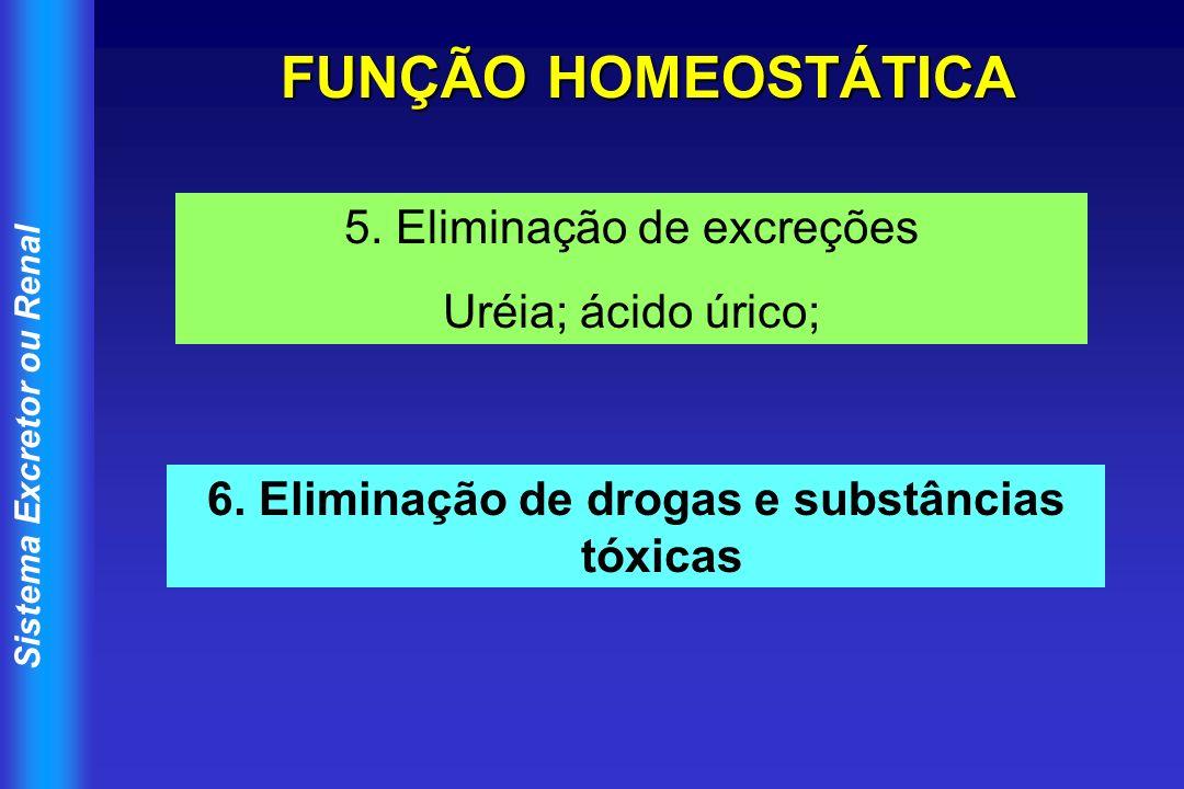 Sistema Excretor ou Renal FUNÇÃO HOMEOSTÁTICA 5. Eliminação de excreções Uréia; ácido úrico; 6. Eliminação de drogas e substâncias tóxicas