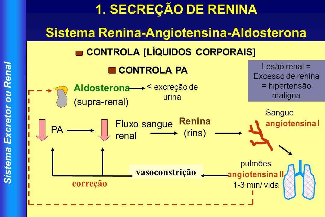 Sistema Excretor ou Renal 1.SECREÇÃO DE RENINA Sistema Renina-Angiotensina-Aldosterona vasoconstrição correção PA Fluxo sangue renal Renina (rins) San