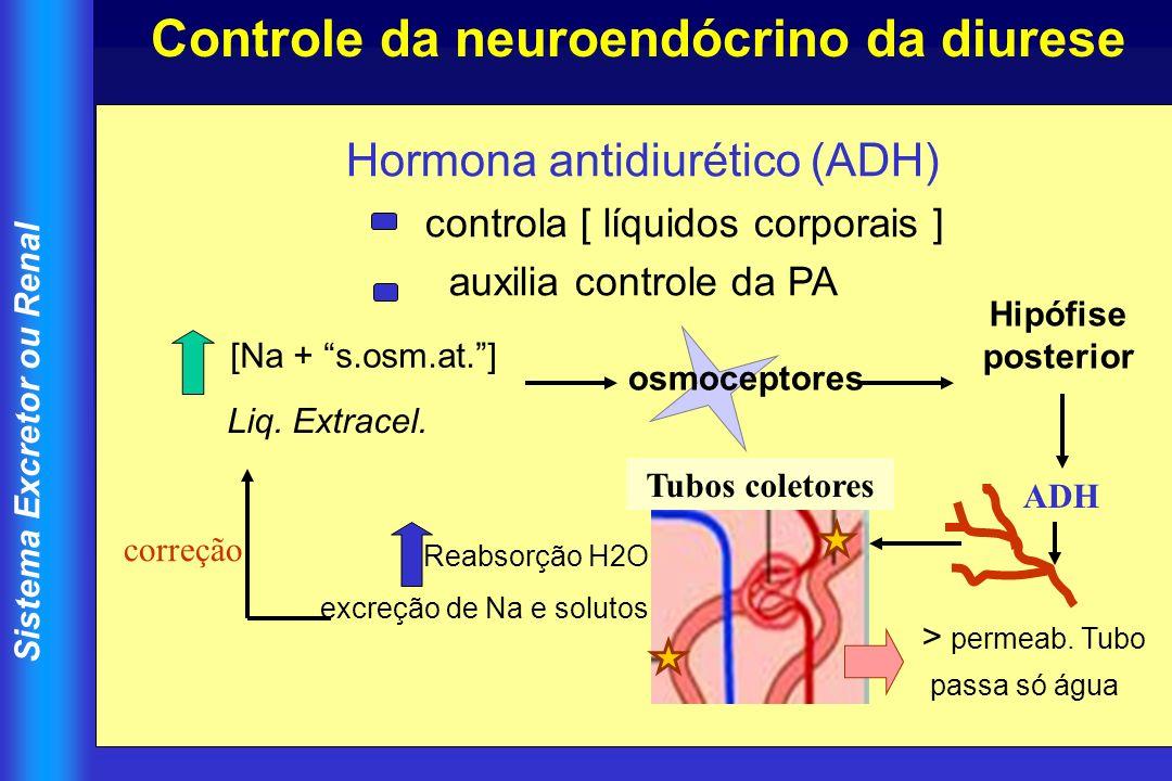 Sistema Excretor ou Renal Hormona antidiurético (ADH) controla [ líquidos corporais ] auxilia controle da PA osmoceptores Liq. Extracel. Hipófise post