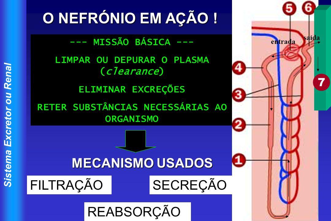 Sistema Excretor ou Renal O NEFRÓNIO EM AÇÃO ! --- MISSÃO BÁSICA --- LIMPAR OU DEPURAR O PLASMA (clearance) ELIMINAR EXCREÇÕES RETER SUBSTÂNCIAS NECES