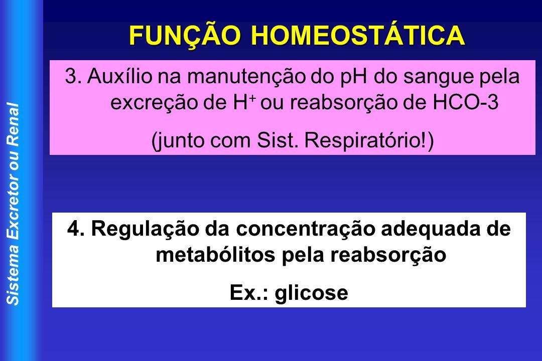 Sistema Excretor ou Renal FUNÇÃO HOMEOSTÁTICA 3. Auxílio na manutenção do pH do sangue pela excreção de H + ou reabsorção de HCO-3 (junto com Sist. Re