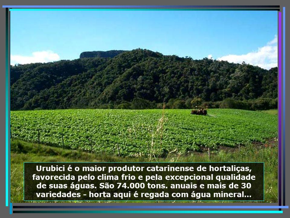 Cascata do Avencal, com 100 m. de queda livre, paraíso para os amantes da tirolesa e do rapel…