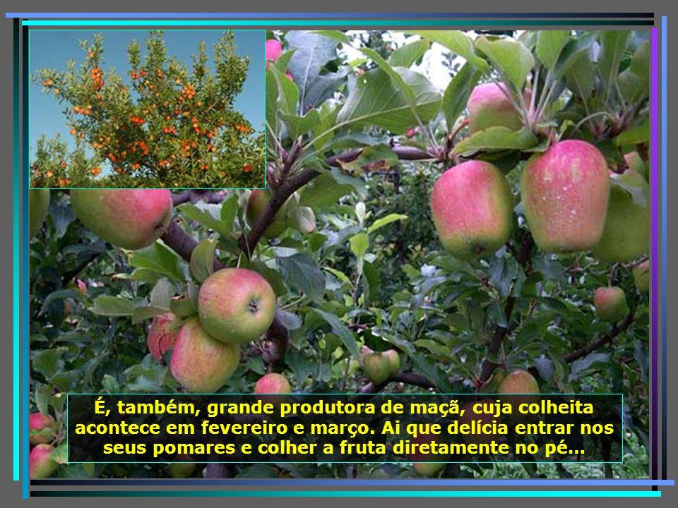 Urubici é o maior produtor catarinense de hortaliças, favorecida pelo clima frio e pela excepcional qualidade de suas águas. São 74.000 tons. anuais e