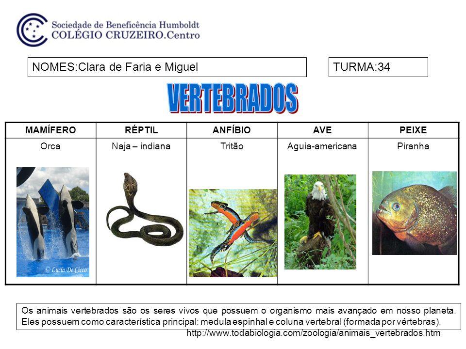 MAMÍFERORÉPTILANFÍBIOAVEPEIXE OrcaNaja – indianaTritãoAguia-americanaPiranha NOMES:Clara de Faria e MiguelTURMA:34 Os animais vertebrados são os seres