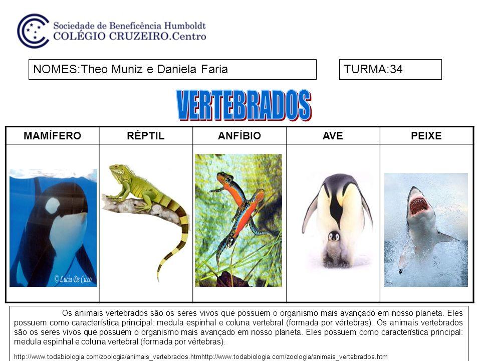 MAMÍFERORÉPTILANFÍBIOAVEPEIXE NOMES:Theo Muniz e Daniela FariaTURMA:34 Os animais vertebrados são os seres vivos que possuem o organismo mais avançado