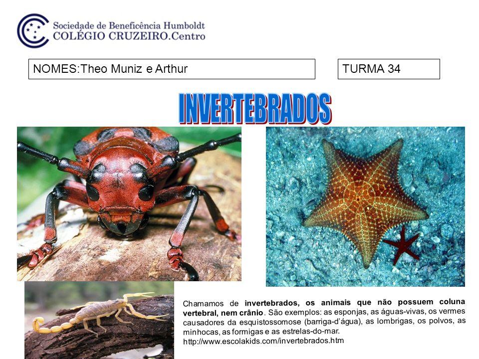 NOMES:Theo Muniz e ArthurTURMA 34 Chamamos de invertebrados, os animais que não possuem coluna vertebral, nem crânio. São exemplos: as esponjas, as ág