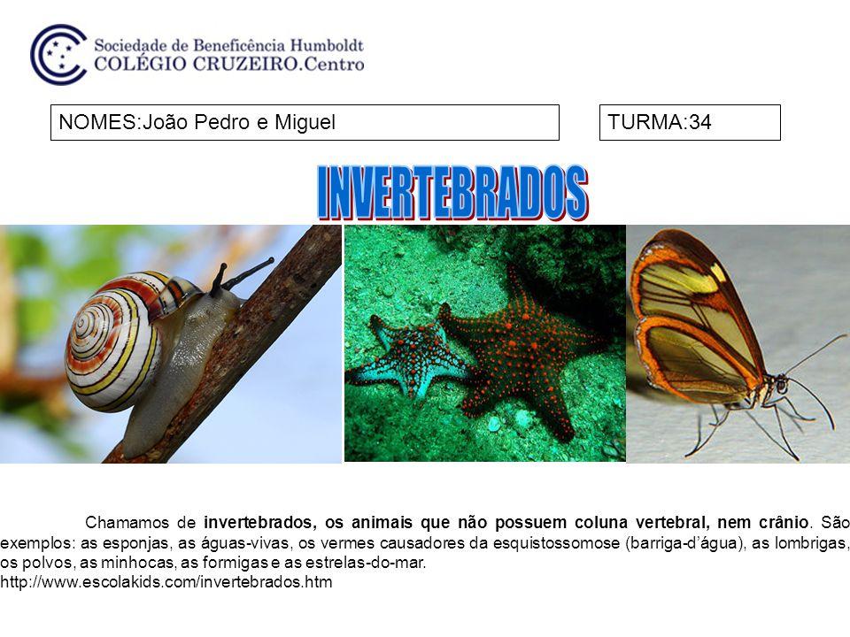 NOMES:João Pedro e MiguelTURMA:34 Chamamos de invertebrados, os animais que não possuem coluna vertebral, nem crânio. São exemplos: as esponjas, as ág