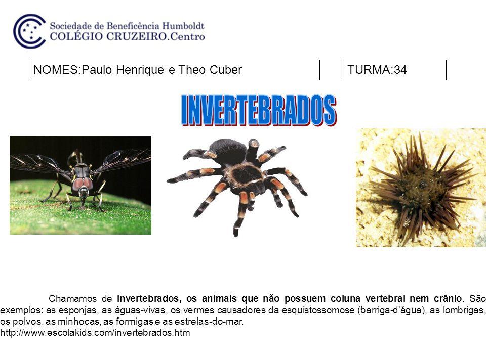 NOMES:Paulo Henrique e Theo CuberTURMA:34 Chamamos de invertebrados, os animais que não possuem coluna vertebral nem crânio. São exemplos: as esponjas